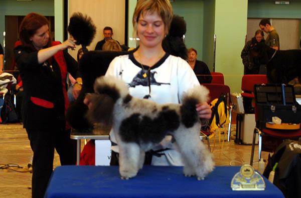 Soutěž ve sříhání psů Pragobest 2010