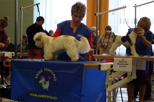 Soutěž ve sříhání psů Pragobest 2007