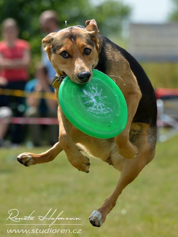 Dogfrisbee sezóna v plném proudu – první úspěchy na sebe nenechaly dlouho čekat